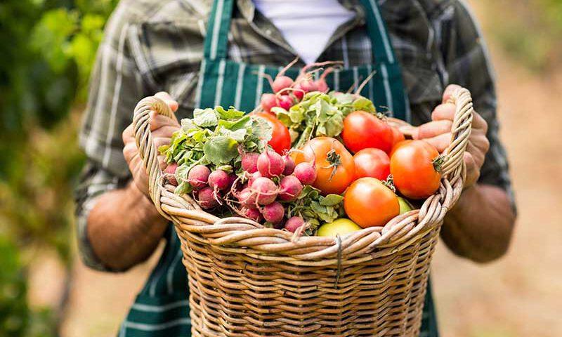 Dit zijn de groenten die je bij Powerslim mag eten